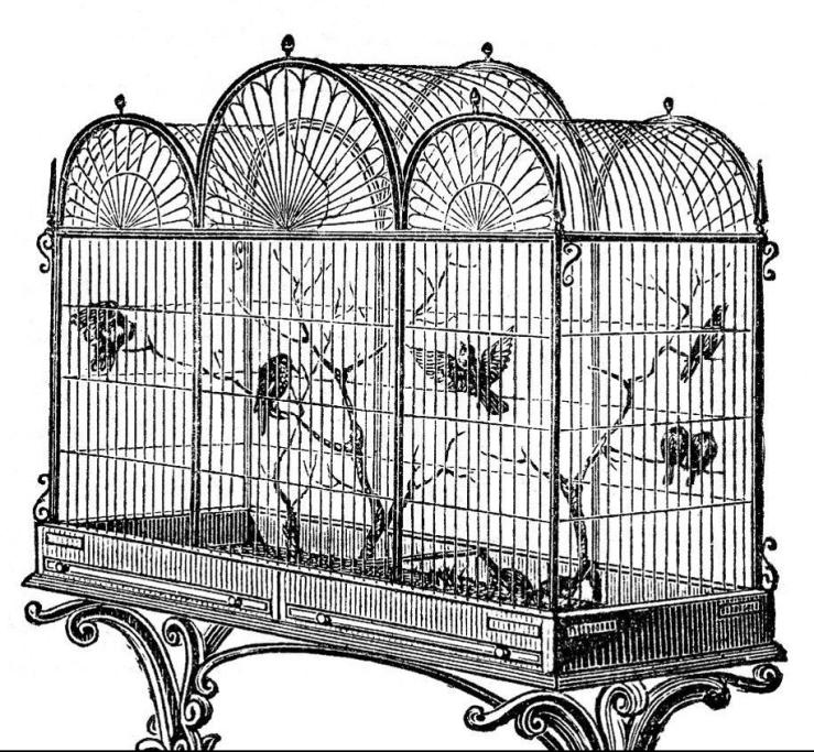 cage3-e1542511607369.jpg